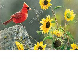 MatMates Cardinal View Doormat for Indoor & Outdoor Use - 18x30