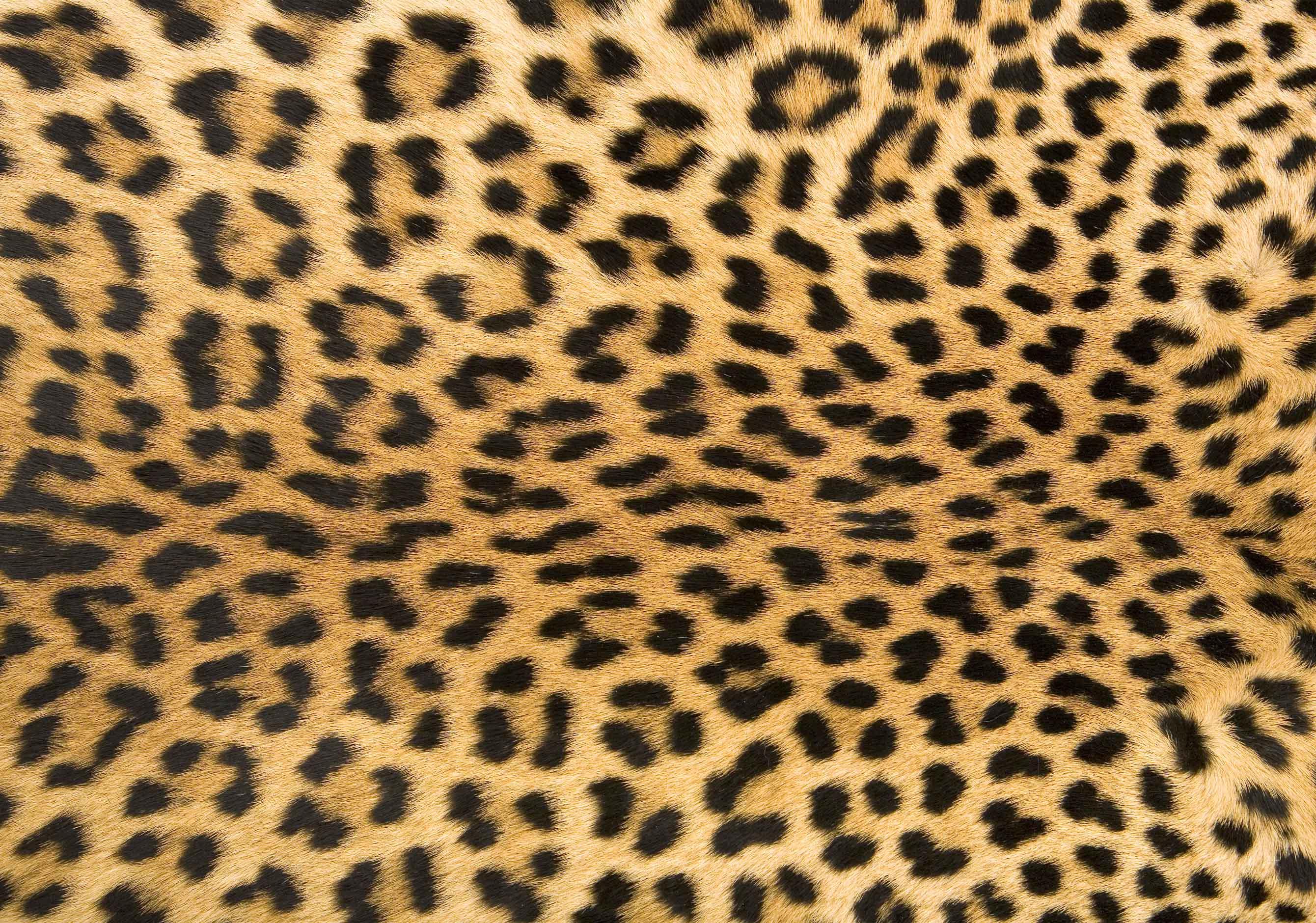 FoFlor Leopard Print Rug Doormat Runner Area