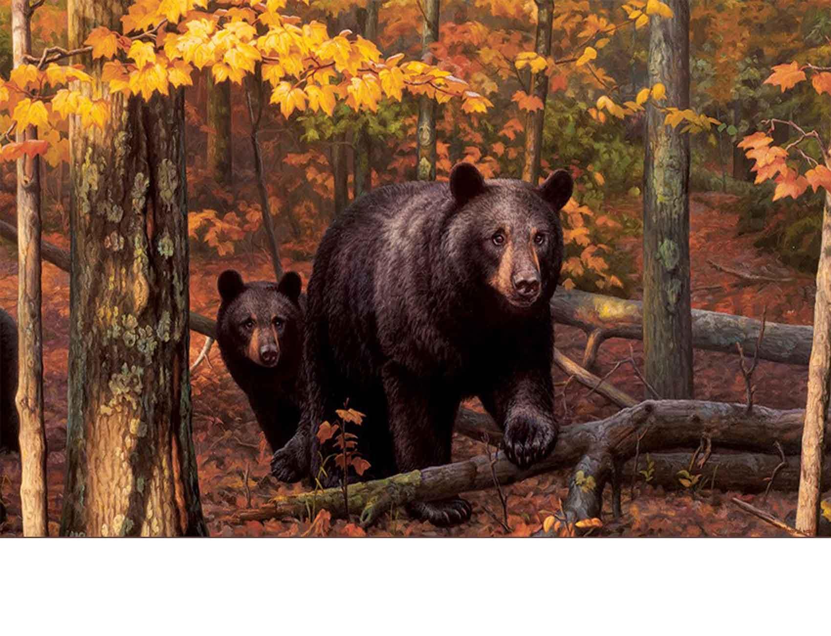 Indoor Amp Outdoor Fall Bear Insert Doormat 18x30
