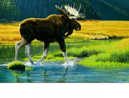 Indoor & Outdoor Wetland Moose Insert Doormat - 18 x 30