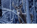 Indoor & Outdoor Winter Deer Insert Doormat - 18x30